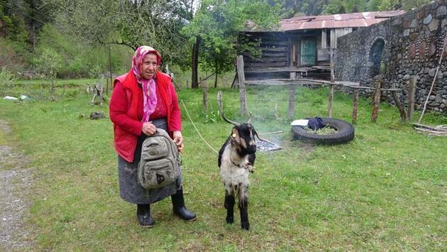 Karadeniz'de yaylalara yolculuk erken başladı