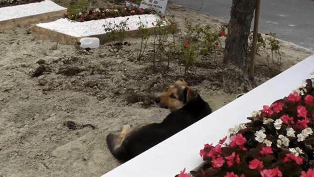 Ebru Şallı o köpeğin bakımını üstlendi