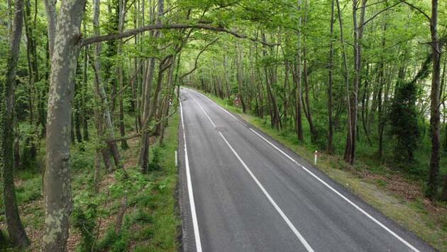 Safranbolu'nun ağaç tünelli yolu görenleri hayran bırakıyor!