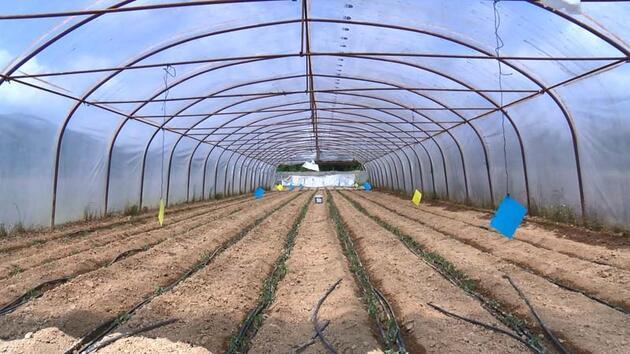 Koronavirüs İstanbul'da tarımı etkilemedi... Mart ayından bu yana üretim arttı