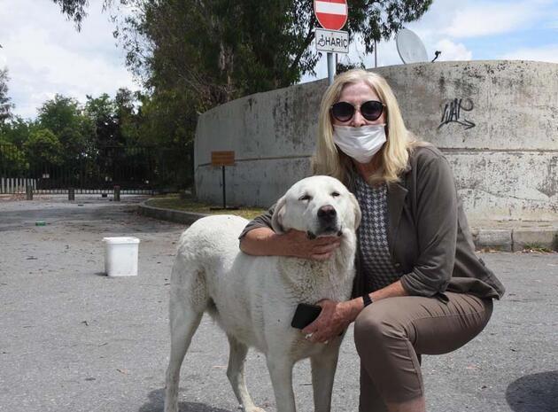HAYTAP: Türkiye'yi eleştiren ülkeler hayvanları gaz odalarına gönderiyor