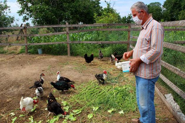 """Cins tavuktan """"mavi yumurta""""! Taleplere yetişemiyor..."""