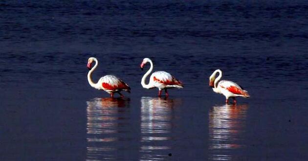 Flamingoların Van Gölü kıyılarındaki görsel şöleni