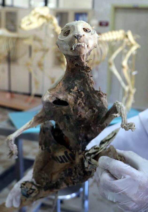 Son dakika... Evin bodrumunda bulunan hayvan iskeleti, sansara ait çıktı