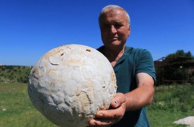 Son dakika... Futbol topu sandı, 5 kilogram ağırlığında mantar çıktı