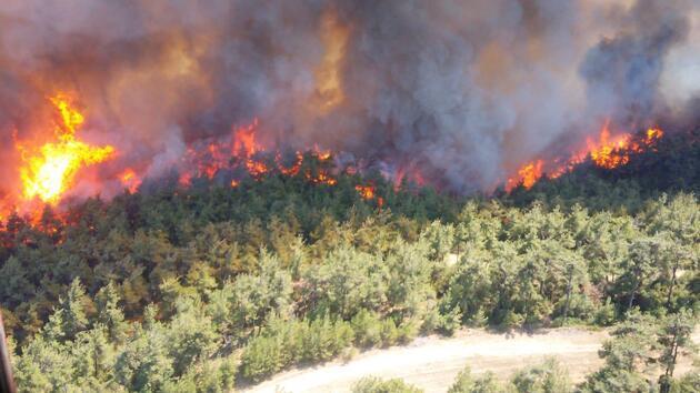 Son dakika... Çanakkale'de orman yangını