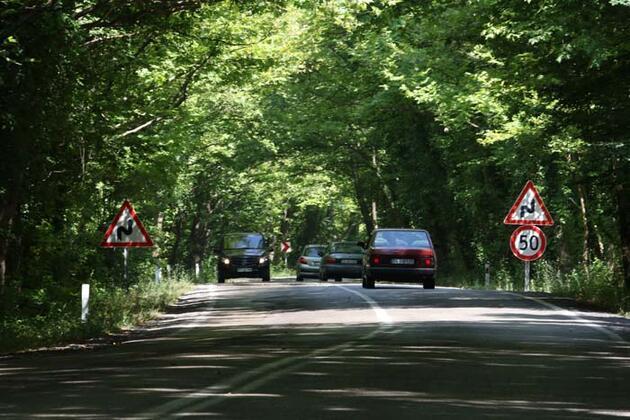 Doğal ağaç tünelli yol kendisine hayran bırakıyor