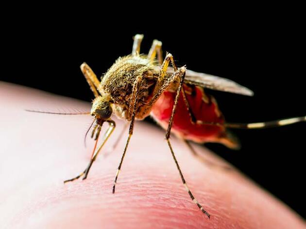 Sinekler koronavirüs taşır mı?Uzman isim açıkladı