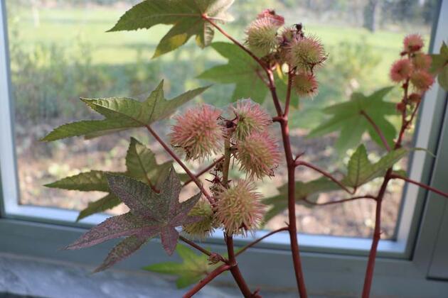 4 ayda 850 farklı bitki çeşidi topladı!