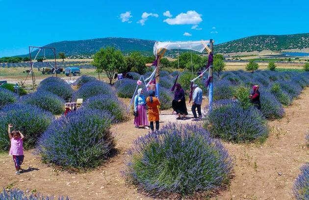 250 nüfuslu 'lavanta köyü', 1 milyon kişiyi ağırlayacak