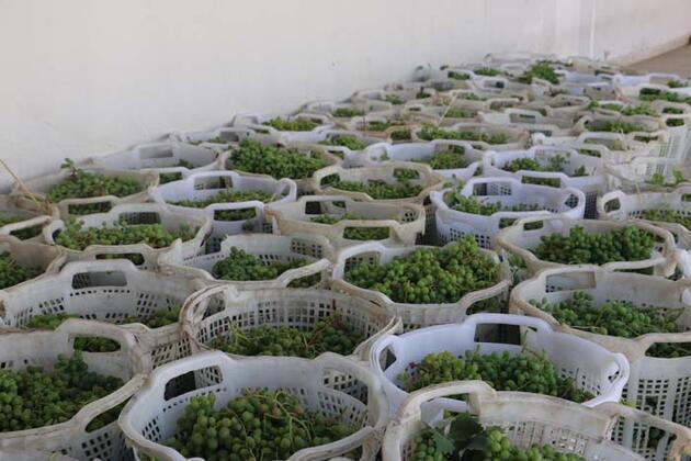 Şifa kaynağı 'koruk suyu' faydaları ile şaşırtıyor