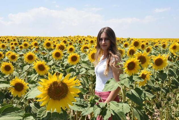 Eskişehir ovaları ayçiçekleriyle sarıya büründü