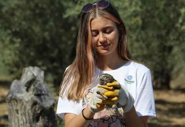 Tedavisi tamamlanan baykuş doğaya salındı