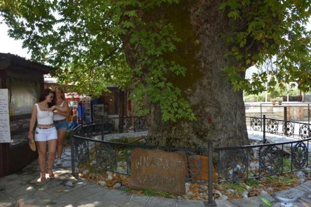 Son dakika... Tarihi çınar ağacı, 650 nüfuslu mahallenin ekonomisine katkı sağlıyor