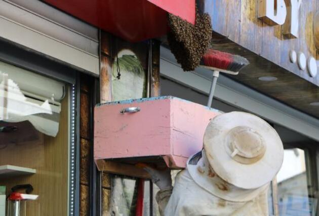 Son dakika... Arılar yüzünden esnaf iş yerlerini açamadı