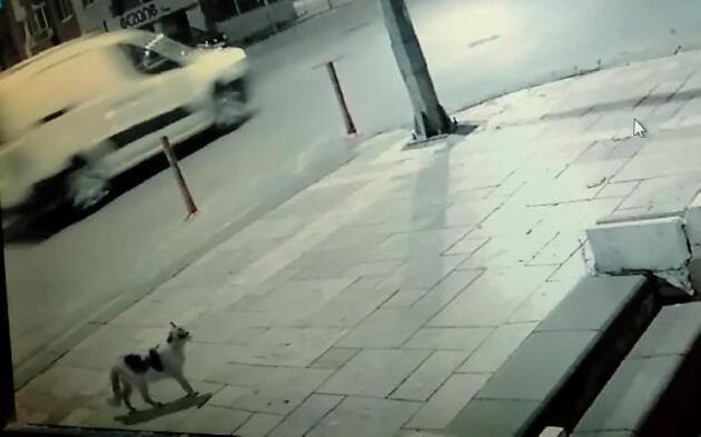 Son dakika... Marketindeki sucuğu yiyen sokak kedisini tekmeledi