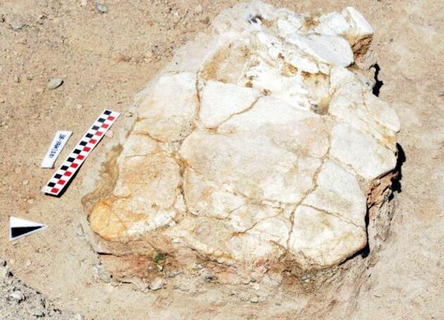 Son dakika... Kayseri'deki ilk kez 7,5 milyon yıllık kaplumbağa fosili bulundu