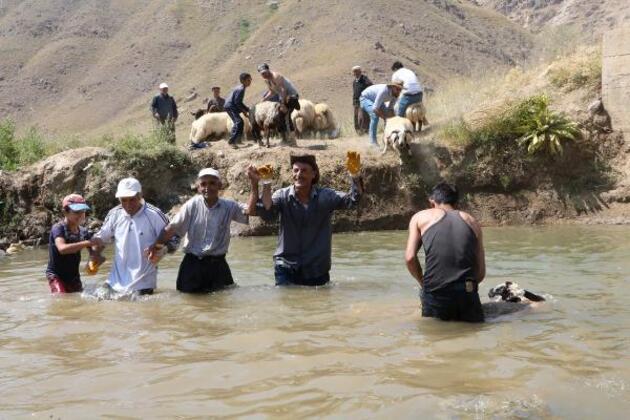 Son dakika... Hakkari'de kuzuları şampuanla yıkayıp şenliğe hazırladılar