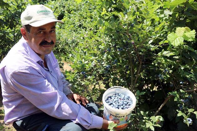 Emekli madenci, ürettiği meyveyle talebe yetişemiyor!