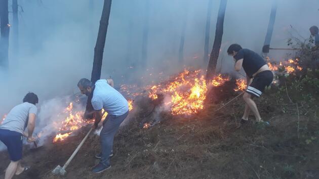 Son dakika... Maltepe'de ormanlık alanda yangın
