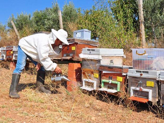 Gramını 700 liradan arı zehri ihraç ediyor!