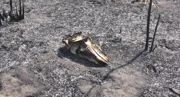 Son dakika.. Kuş Cenneti'ndeki tahribat havadan görüntülendi