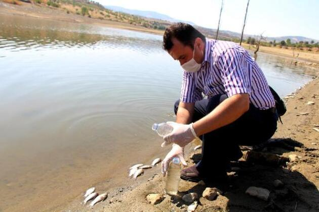 Son dakika.. Sular çekildi, binlerce balık telef oldu