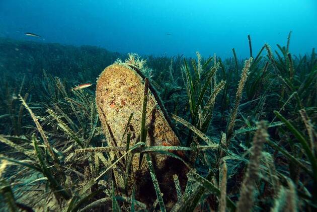 Denizlerin temizleyicisi pinaları öldüren virüs, kıyılarımıza geldi
