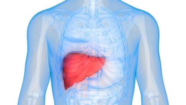 Karaciğer yağlanmasını önlüyor! İşte yapmanız gerekenler