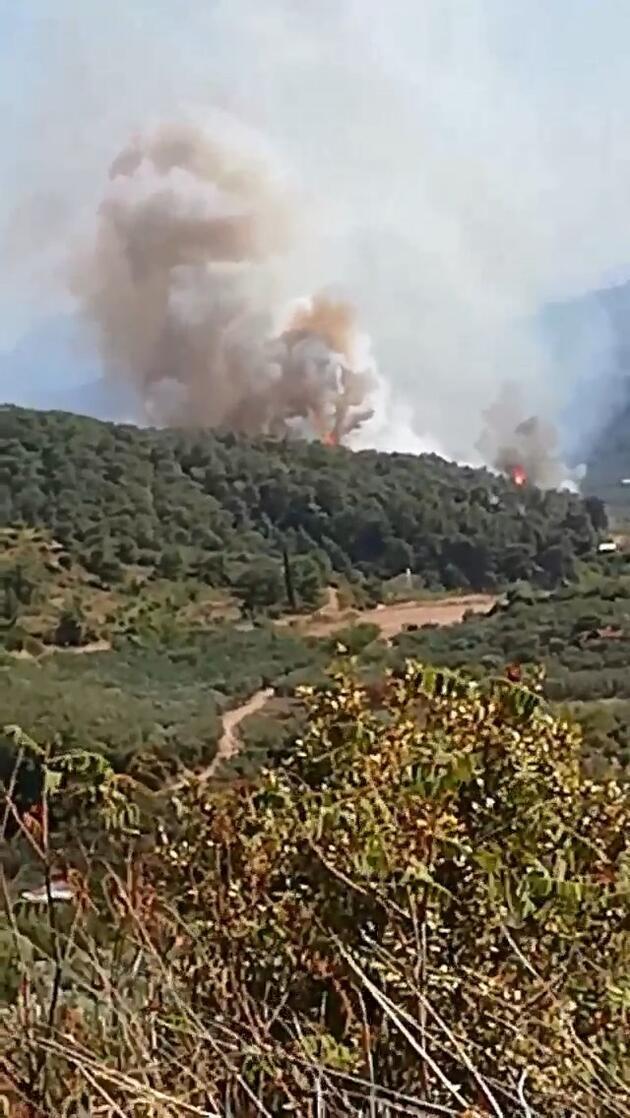 Son dakika... Bursa'da orman yangını