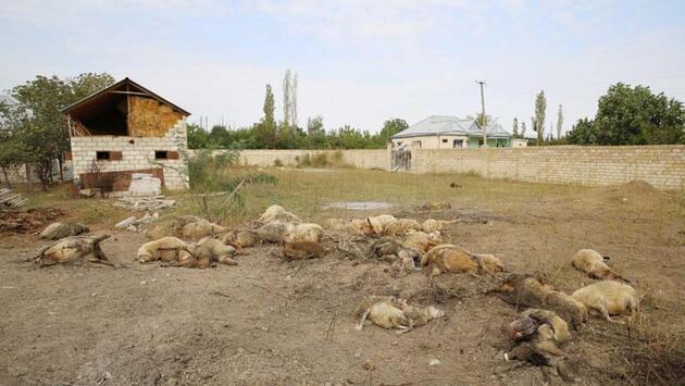 Son dakika... Ermenistan'ın saldırıları sonucu hayatını kaybeden sivillerin sayısı 19'a yükseldi