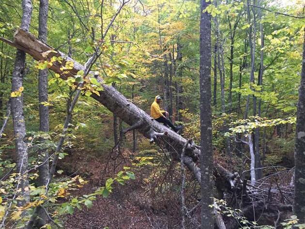 Doğa ve fotoğraf tutkunları sonbahar renklerini görüntüledi