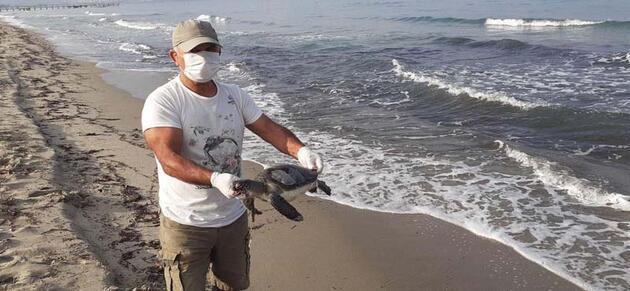 Kuşadası Körfezi'nde bir ölü deniz canlısı daha bulundu