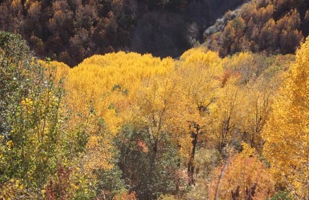 Erzincan'da sonbaharda renk cümbüşü