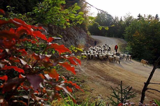 Doğu Karadeniz'de yaylacıların göç yolculuğu