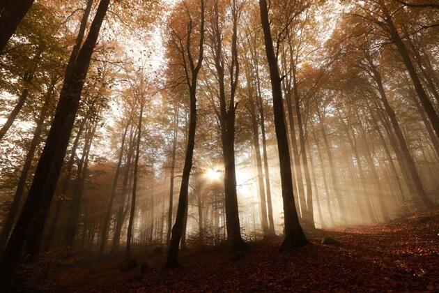 Domaniç Dağları'nda sonbaharda renk şöleni