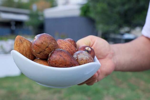 Avokado talebine yetişemeyen üreticiler, çekirdek toplamaya başladı
