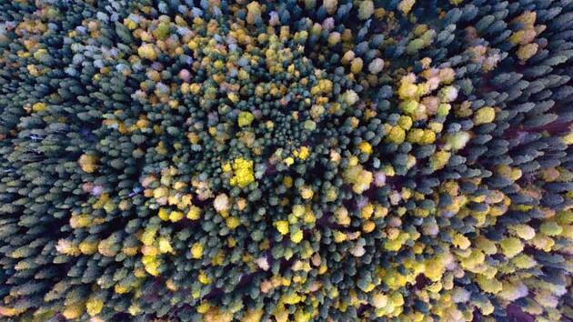 Doğa harikası Yedigöller'de sonbahar güzelliği