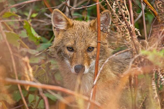Kızıl geyikleri görüntüleyen fotoğrafçı Şenel:Tetiğe değil, deklanşöre bas