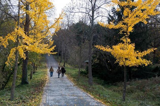 İstanbul'un oksijeni bol en güzel adresi: Atatürk Arboretumu