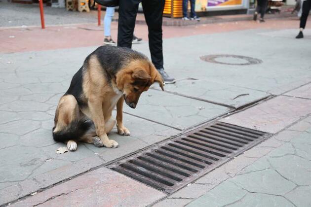 Mazgalı izleyen köpeğin sırrı ortaya çıktı