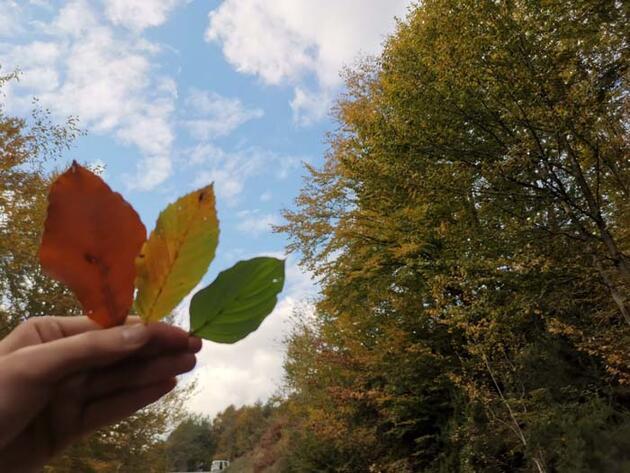 Sonbaharın tüm renkleri bir arada! Gören hayran kalıyor