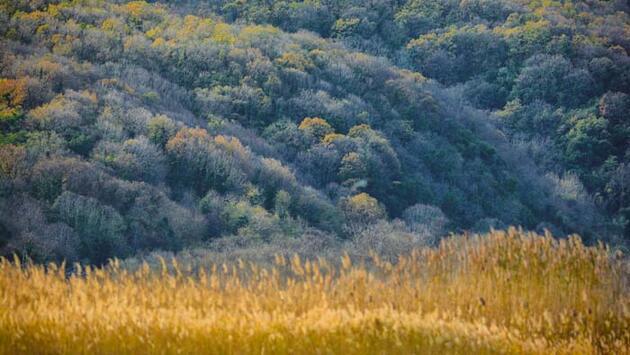 Sonbahar renkleri arasında yaban hayat! Doğa harikası görüntüler ortaya çıktı