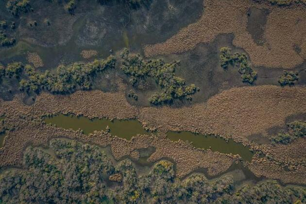 Deniz ile ormanın kucaklaştığı yer! Ziyaretçi akınına uğruyor