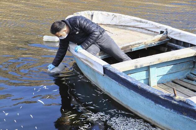Ankara'da barajdaki balık ölümlerine inceleme