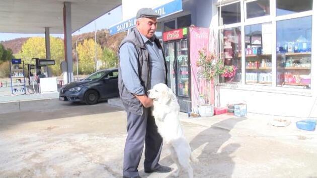'Pamuk'un sahibi: Vuran değil de, sahibi ve komşusu suçlu gösteriliyor