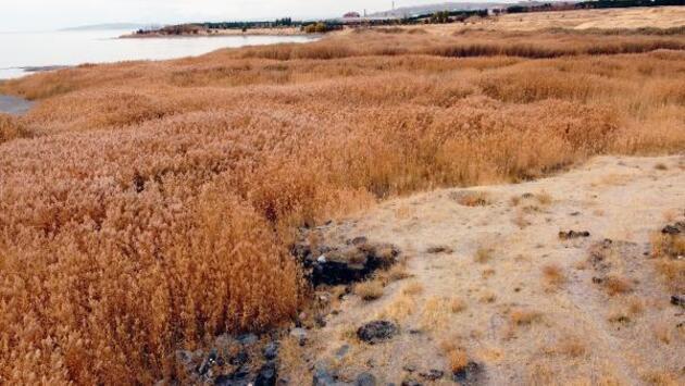 Van Gölü'nde Urartu dönemine ait kalıntılar bulundu