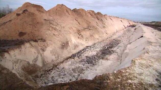 Danimarka'da kabus: Öldürülen binlerce vizon toprağın altından yüzeye çıktı