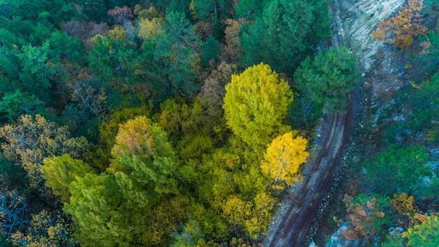 Havadan görüntülendi! Sındırgı sonbahar güzelliği ile göz kamaştırıyor