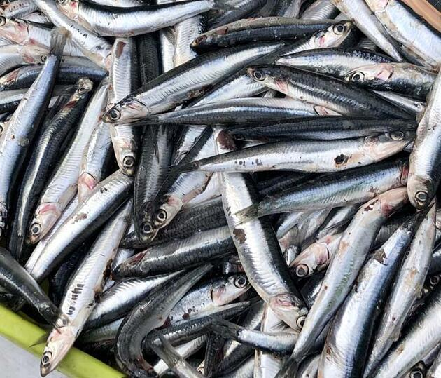 Koronavirüs sürecinde hangi balıklar tüketilmeli! Uzmanından beslenme önerileri